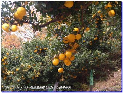 091129_mizuo_014