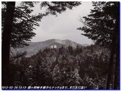 120226_hanasetoge_nattyoshitami_02