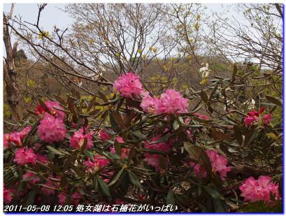 110508hakodateyama_syojyoko_002
