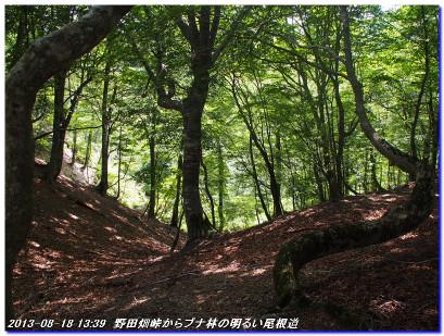 130818_nodabatatoge_mikunitoge_02