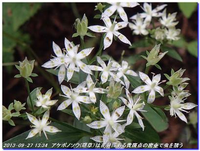 130927_kantensando_kumogaiwa_furude