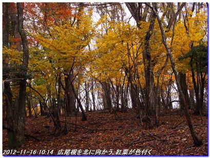 121116_iotaniyamasyuhentansaku_011