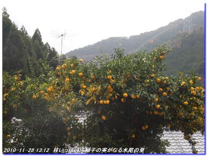 101128_ushimatuyama_03