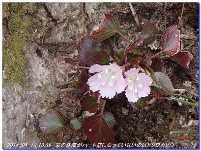 140413_minetokayama_kuwataniyama_01