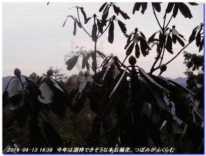 140413_minetokayama_kuwataniyama_04