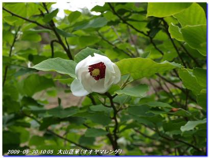 090530_rokkokouzansyokubutuen_03