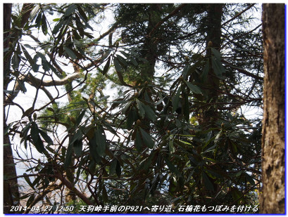 140427_fukandoyama_onomurawarida_10