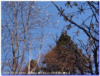 140427_fukandoyama_onomurawaridak_5