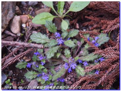 140506_mituzukoyama_titoseyama_04