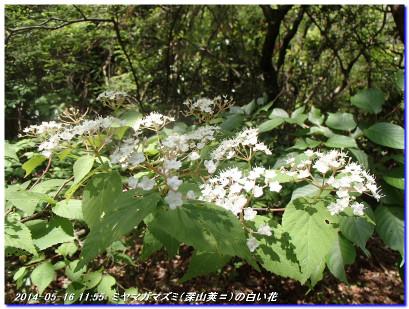 140516_hokurajinjya_amagatoge_05