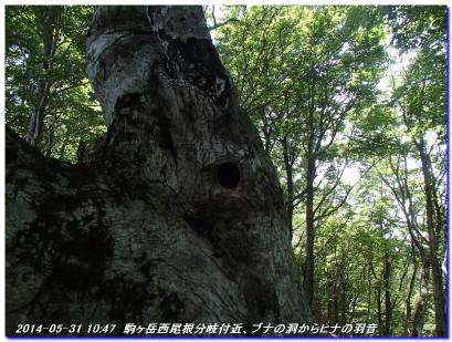 140531_0601_komagatake_01