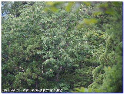 140608_sasaritoge_onomurawaridake_2