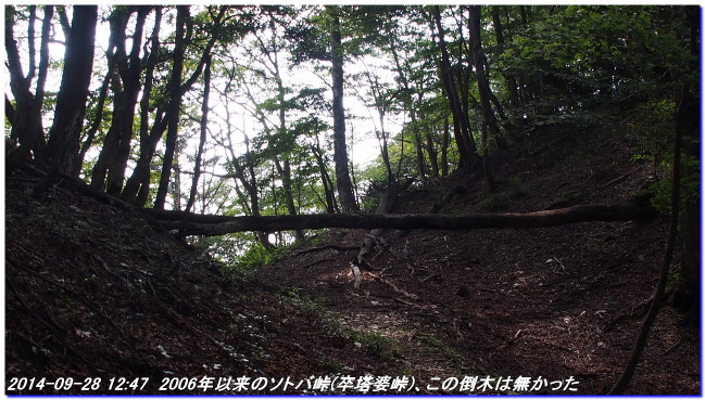 140928_sotobatoge_kamosedaniyama_03