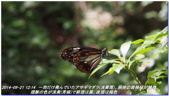 140921_yokotanitoge_gyojyayama_kara