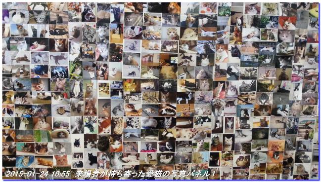 150124_iwagomituaki_neko_02