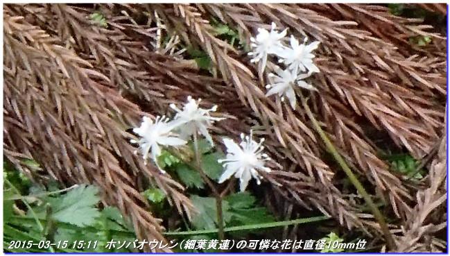 150315_mitudukoyama_hositoge_tito_3