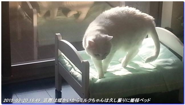 150320_milk_himesamabed_01