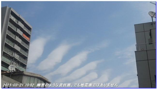 150321_harunohana_01
