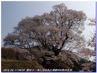 140417_buturyuji_saburogatake_025