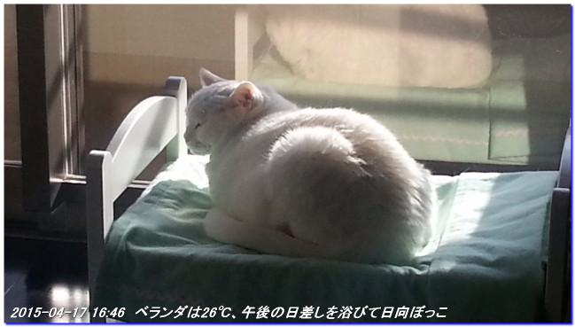 150417_himesamabed_01
