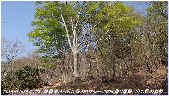 150425_26_notokoe_sanjyodake_oomi_4