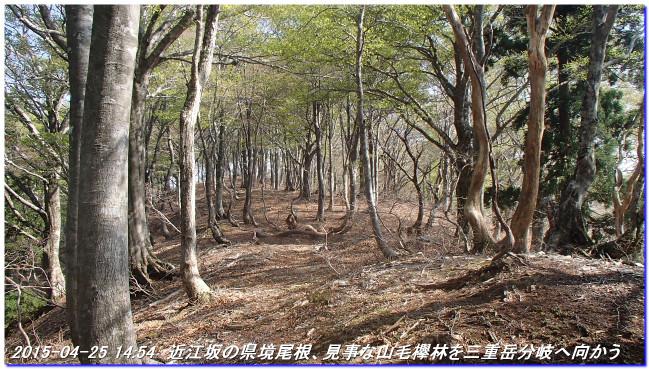 150425_26_notokoe_sanjyodake_oomi_5