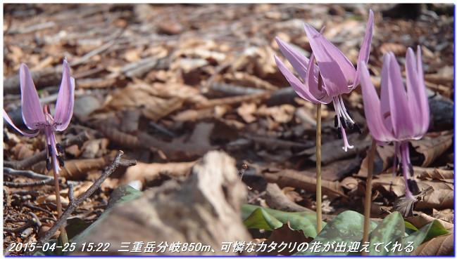 150425_26_notokoe_sanjyodake_oomi_6