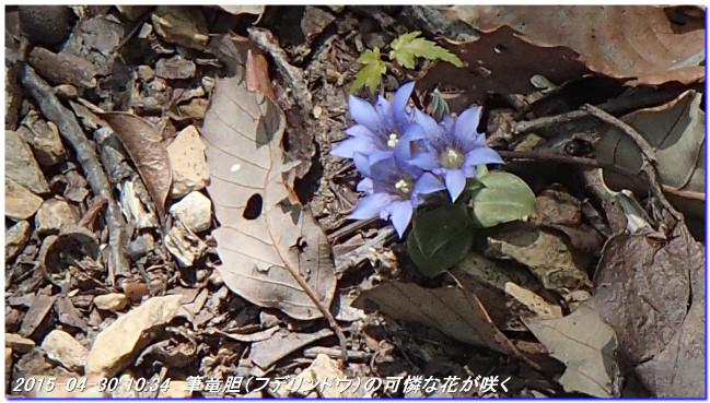 150430_ebisaka_ooiwayama_hijitani_3