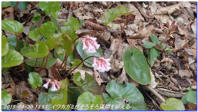 150430_ebisaka_ooiwayama_hijitani_8