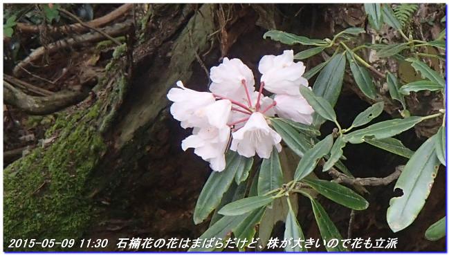 150509_ebisaka_ooiwayama_hijitanisa