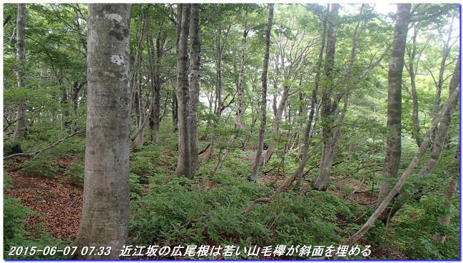 150606_07_takitaniyama_oomikagey_10