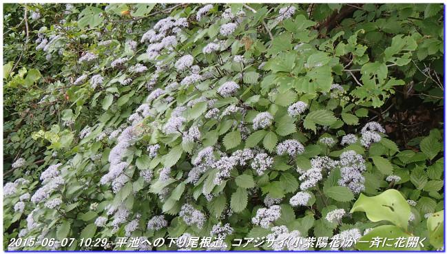 150606_07_takitaniyama_oomikagey_12