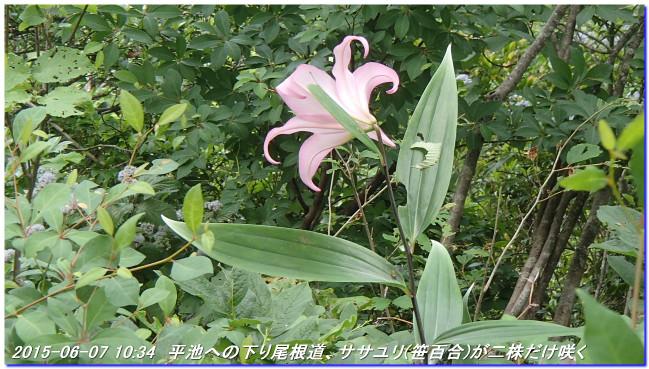 150606_07_takitaniyama_oomikagey_13