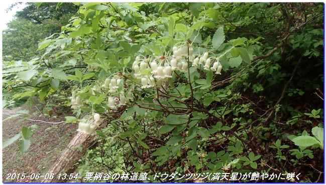 150606_07_takitaniyama_oomikageya_3