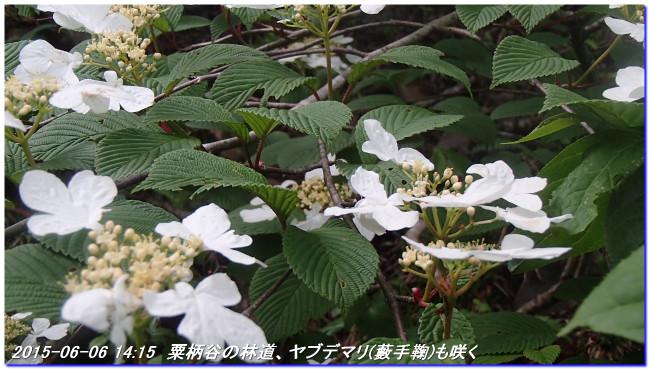 150606_07_takitaniyama_oomikageya_4