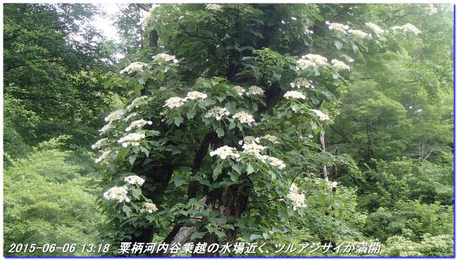 150606_07_takitaniyama_oomikageyama