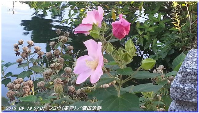 150922_uzumoridaisanpomiti_01