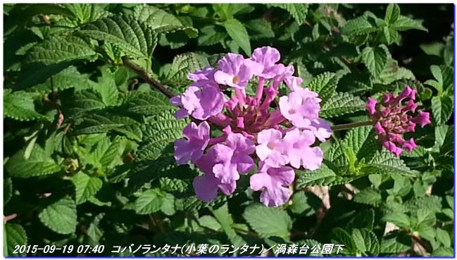 150922_uzumoridaisanpomiti_02