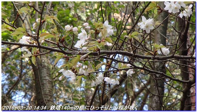 160320_kamidaigo_takatukayama_10