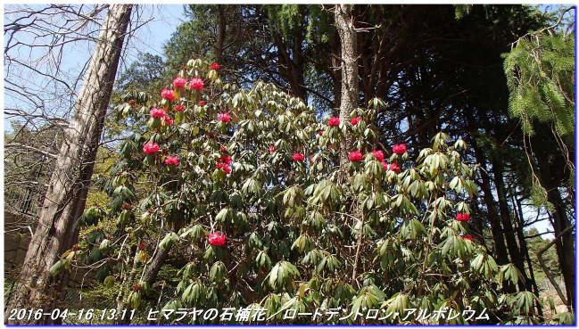 160416_uzumoridai_rokkokouzansyo_10