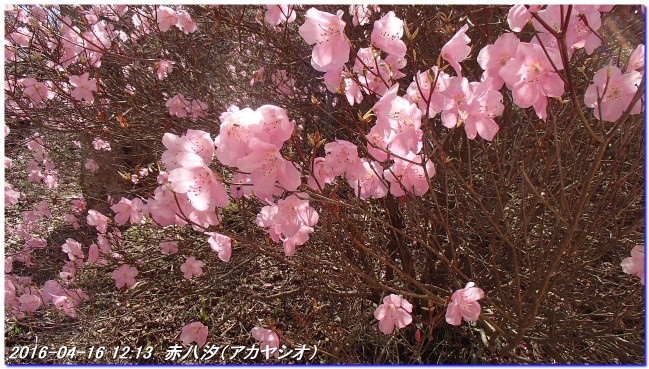 160416_uzumoridai_rokkokouzansyok_3