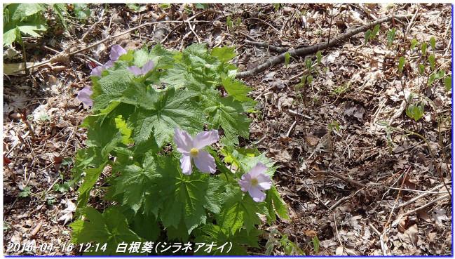 160416_uzumoridai_rokkokouzansyok_4