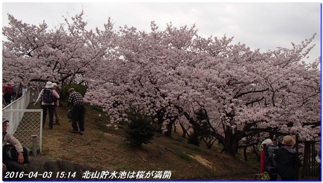 160403_syakegoyamakyanpujyo_03