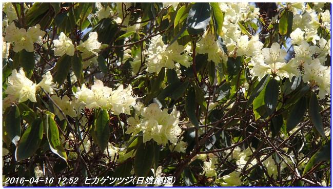 160416_uzumoridai_kozansyokubutuen_