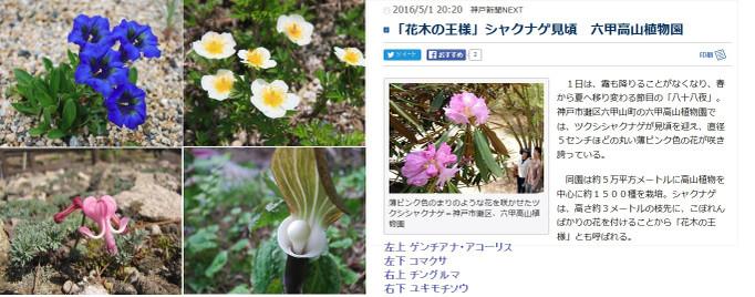 160504_rokko_kouzansyokubutuen