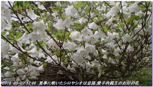 160507_uzumoridai_rokkokouzansyokub