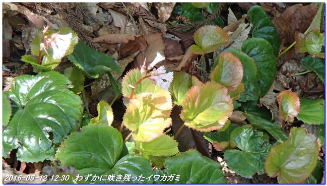 160512_ooiwayama_okuyama07