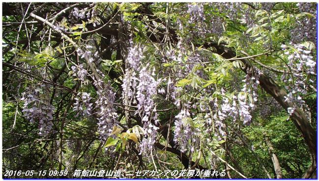 160515_hakodateyama_syojyoko_03
