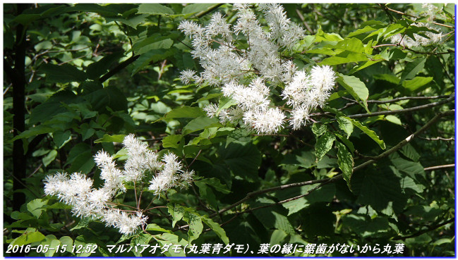 160515_hakodateyama_syojyoko_09