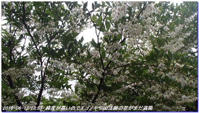 160612_kanpu_akasakayama_04